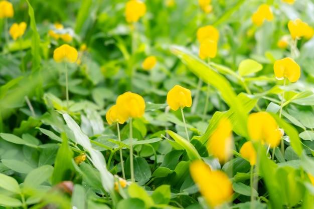 Fond de fleurs jaunes de printemps avec le soleil du matin
