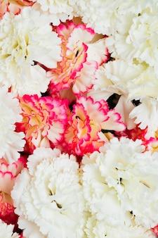 Fond de fleurs d'oeillets roses et blancs