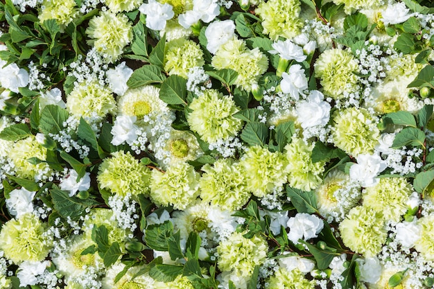 Fond de fleurs d'oeillets verts. vue de dessus