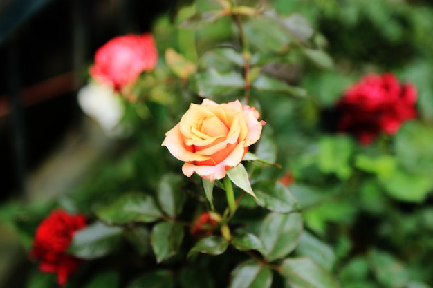 Fond de fleurs de printemps rose
