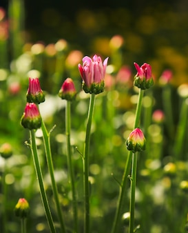 Fond de fleurs de printemps