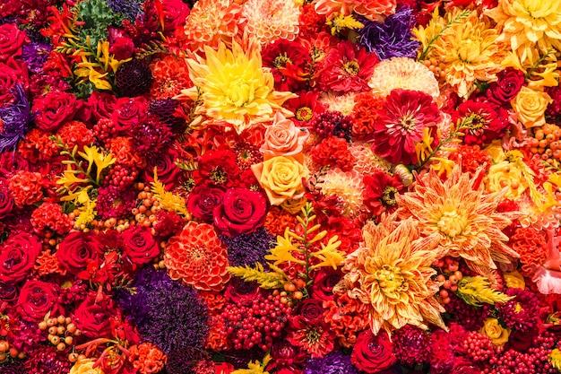 Fond de fleurs rouges automnales en vue de dessus