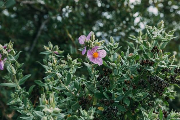 Fond de fleurs sauvages
