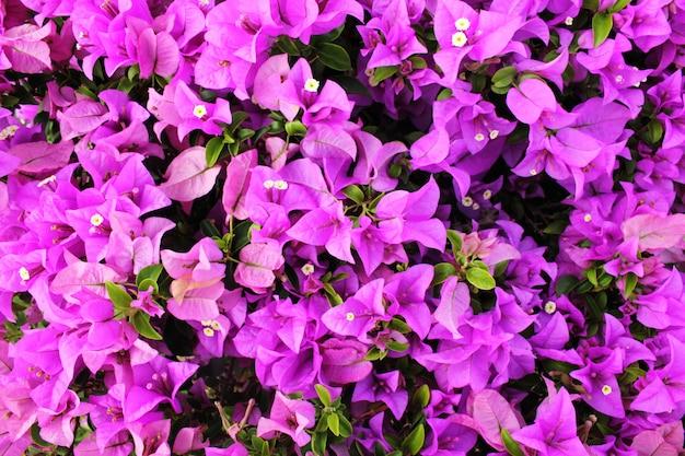 Fond avec des fleurs violettes