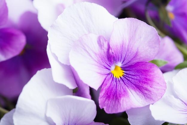 Fond de fleurs violettes