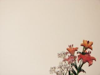 Fond floral, 2d