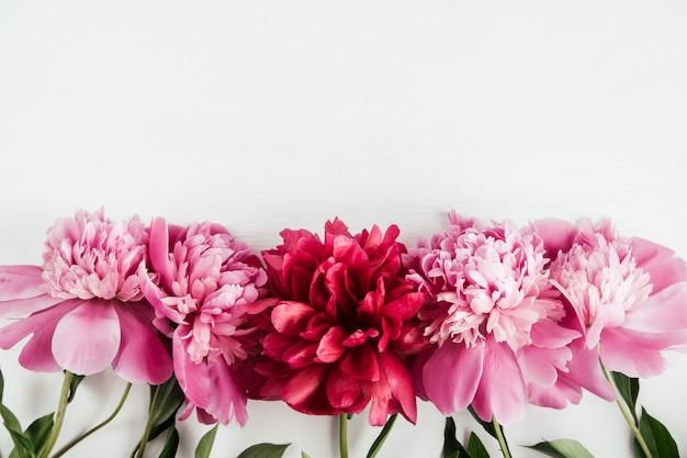 Fond floral d'été avec pivoines roses et rouges