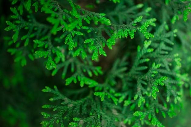 Fond floral avec des feuilles vertes