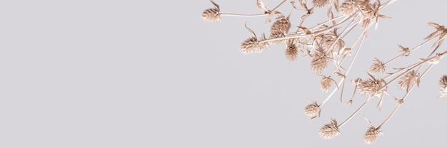 Fond floral de fleur séchée naturelle