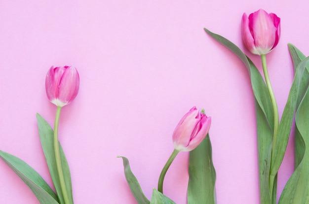 Fond floral avec des fleurs de tulipes. lay plat, vue de dessus. belle carte de voeux avec des tulipes pour la fête des mères, un mariage ou un événement heureux