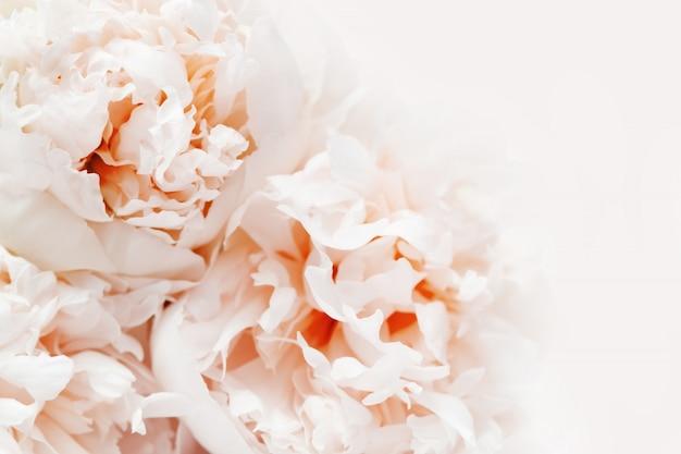 Fond floral, gros plan photo de pivoines délicatesse. fond fleuri de couleur corail vivant avec espace de copie.