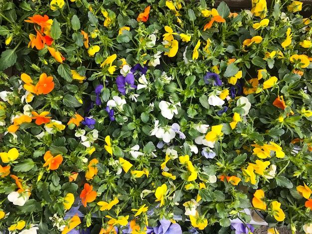 Fond floral lumineux de plantes ornementales et de fleurs