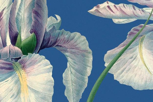 Fond floral printanier avec illustration d'iris espagnol, remixé à partir d'œuvres d'art du domaine public