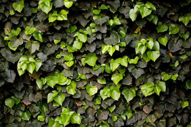 Fond floral vert ou texture.