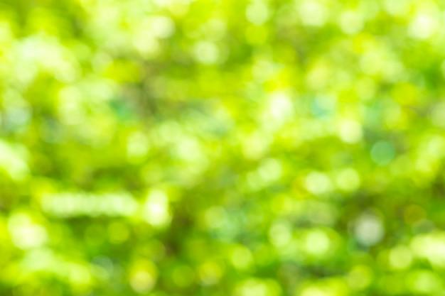 Fond flou vert et la lumière du soleil avec bokeh, printemps.