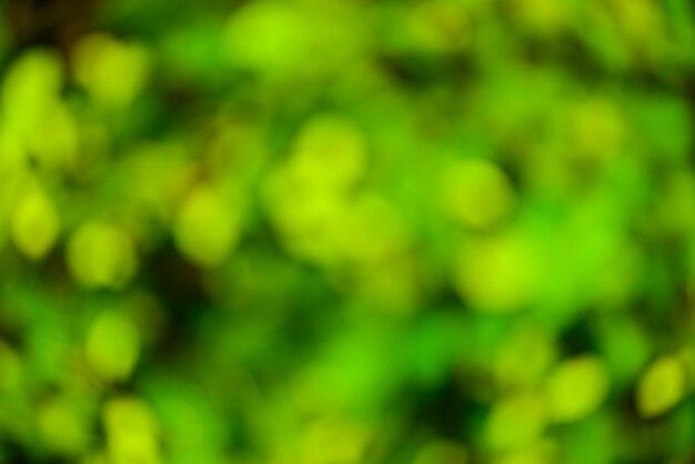 Fond flou vert et soleil