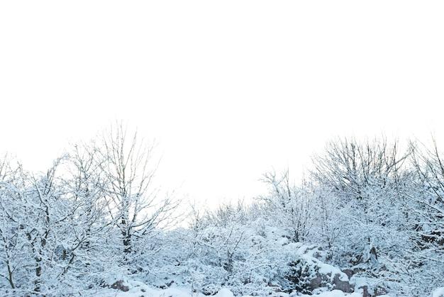 Fond de forêt enneigée d'hiver isolé sur blanc