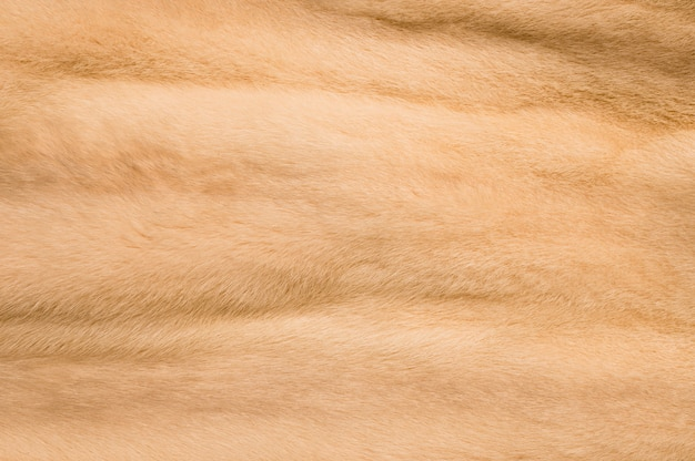 Fond de fourrure de couleur claire