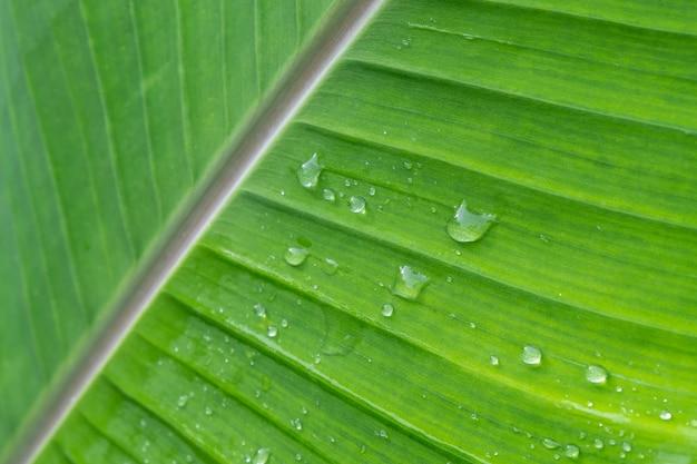 Fond de goutte de pluie sur les feuilles de bananier
