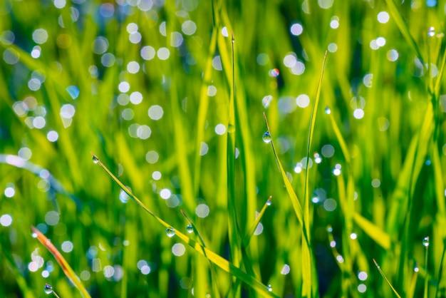 Fond de gouttes de rosée sur l'herbe
