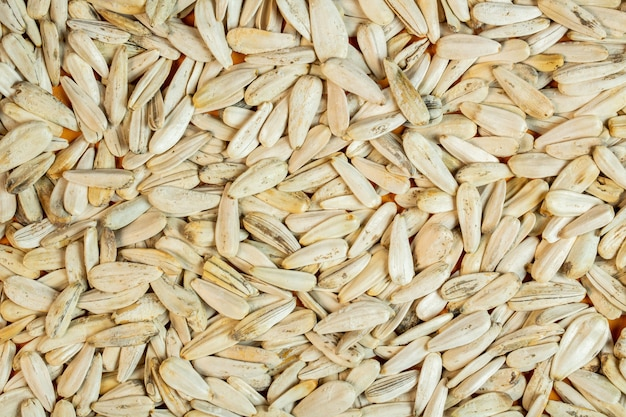 Fond de graines de tournesol blanc vue de dessus
