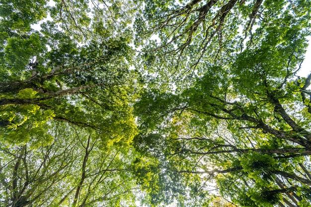 Fond grand arbre vert, faible angle de vue