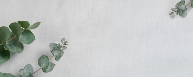 Fond gris clair en béton minimaliste avec des branches d'eucalyptus vue de dessus avec espace de copie