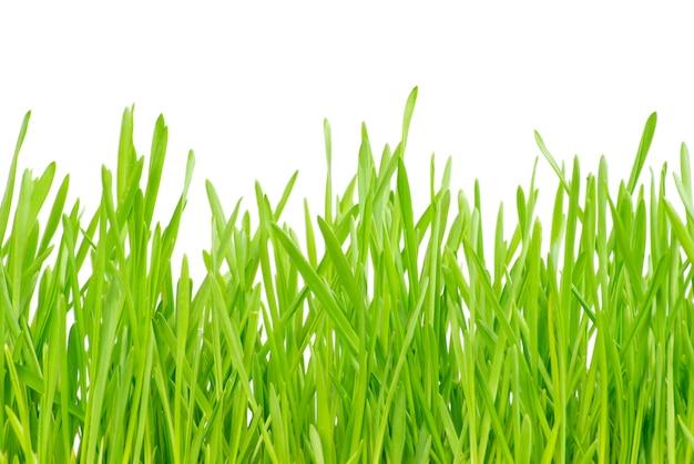 Fond de gros plan de pelouse