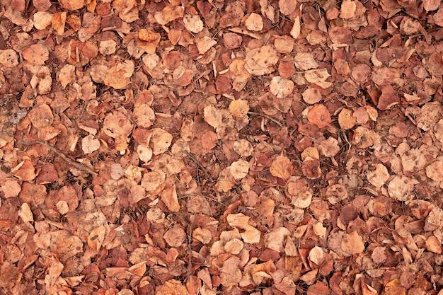 Fond grunge orange de vieilles feuilles de tilleul tombées