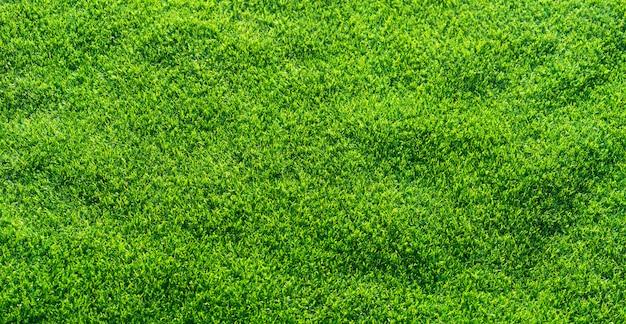 Fond d'herbe artificielle.