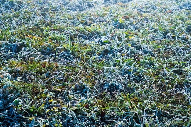 Fond d'herbe couverte de givre