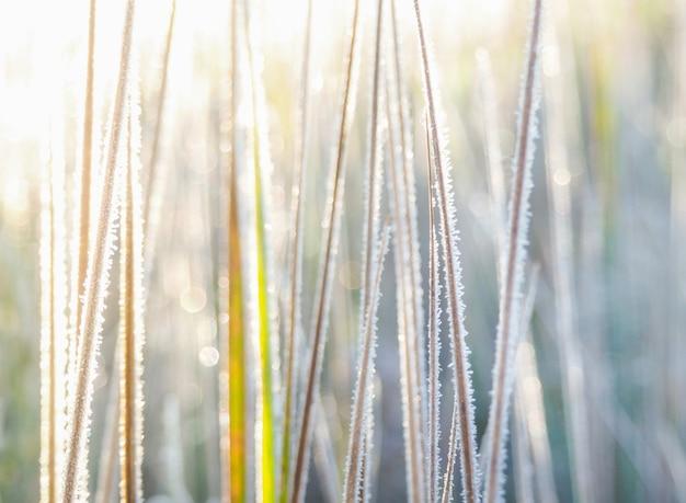 Fond avec de l'herbe, du gel et du soleil.