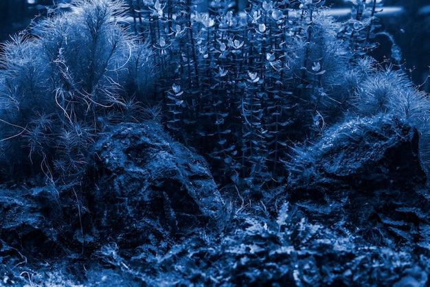 Fond d'herbe et de pierres marines d'algues marines f