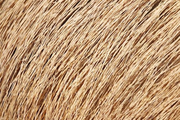 Fond d'herbe sèche brune