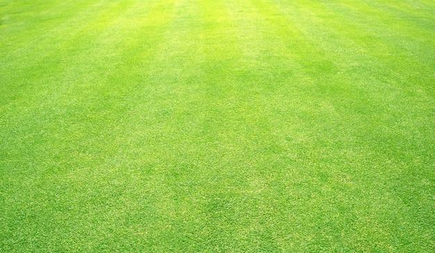 Fond de l'herbe terrains de golf vert pelouse