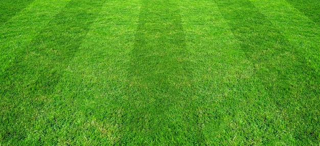 Fond d'herbe verte de fond pour les sports de football et de football.