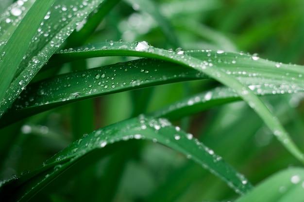 Fond d'herbe verte fraîche avec des gouttes de pluie