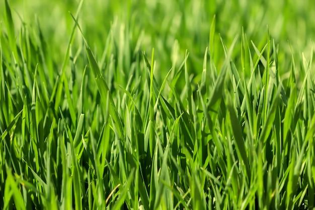 Fond d'herbe verte un jour d'été