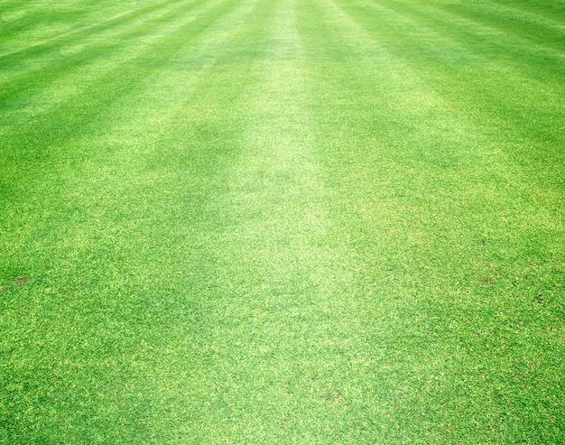Fond de l'herbe
