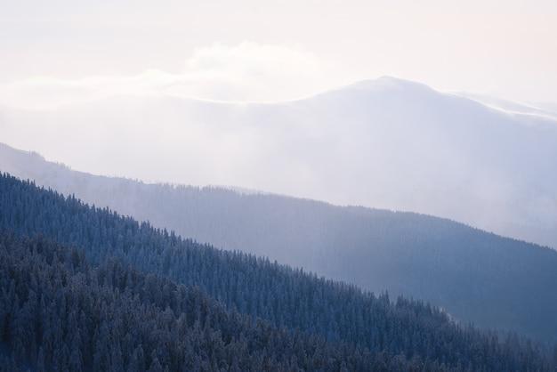 Fond d'hiver avec abstraction dans la nature. collines dans le brouillard. vue sur le sommet enneigé. forêt d'épicéas sur les pentes des montagnes