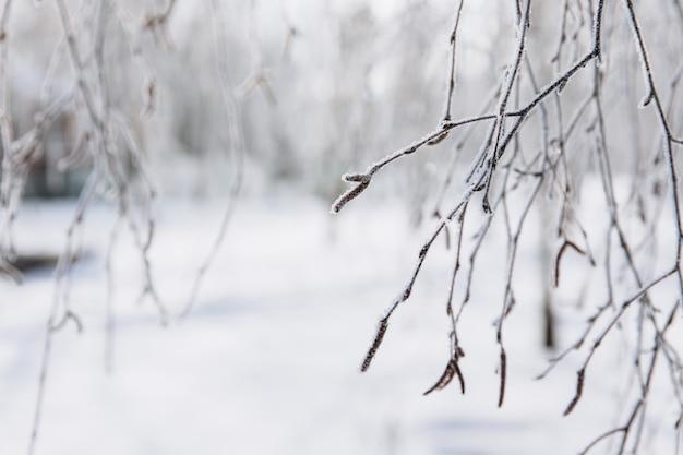 Fond d'hiver avec des branches de neige. carte de voeux de noël