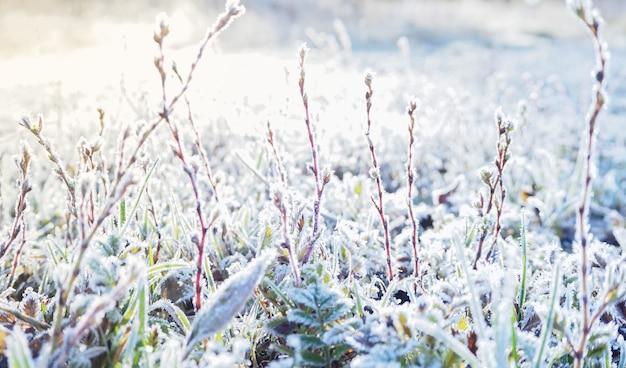 Fond d'hiver avec de l'herbe fraîche, du gel et du soleil.