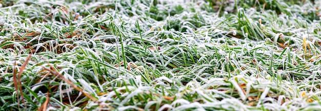 Fond d'hiver avec de l'herbe verte enneigée, panorama