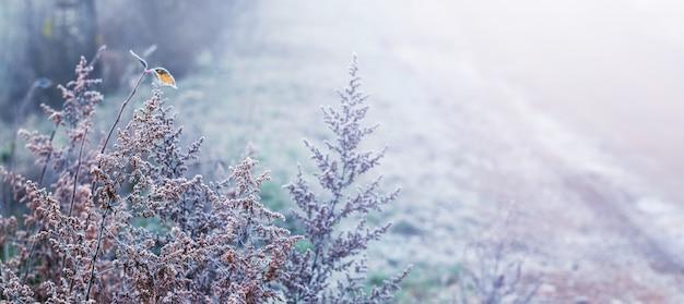 Fond d'hiver avec des tiges d'herbe sèche couvertes de givre près de la route un matin brumeux