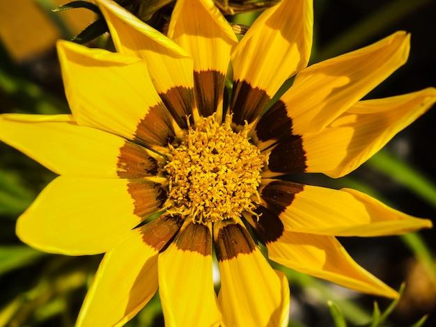 Fond d'images de fleurs