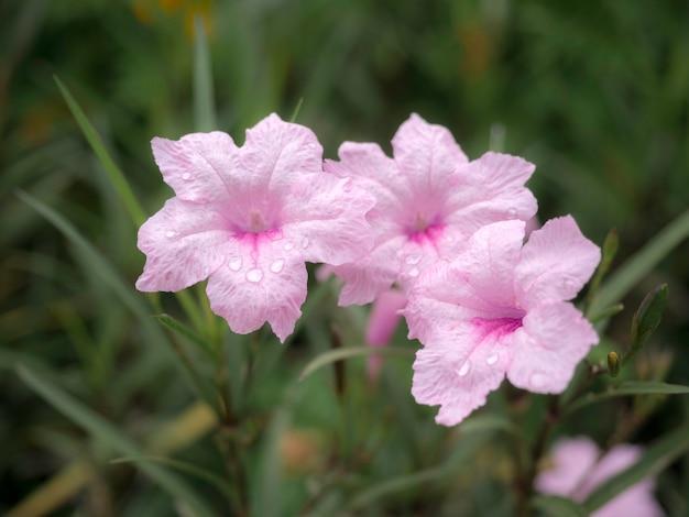 Fond de jardin de belles fleurs. jardin extérieur de fleurs roses et fond de ciel avec espace de copie.