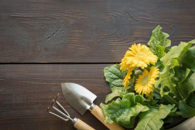Fond de jardinage avec gerbera jaune et péages.