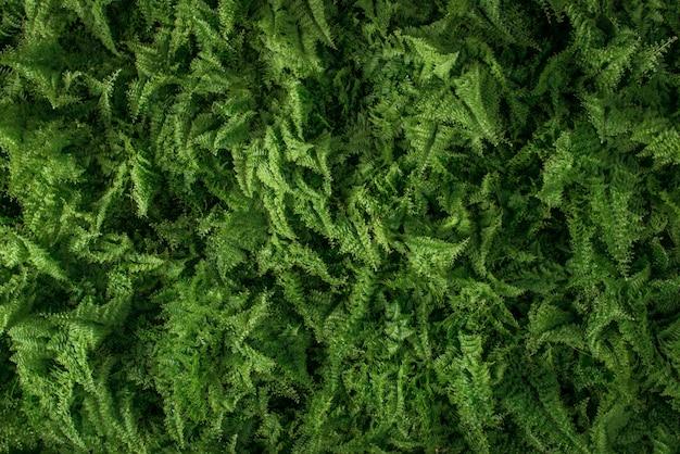 Fond de jeune fougère verte