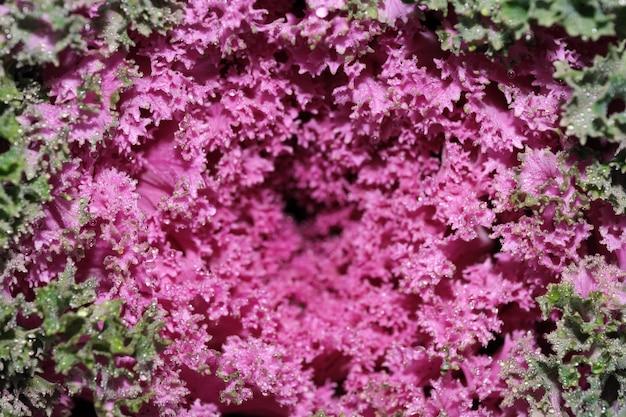Fond de légumes chou-fleur décoratif macro photographie en gros plan