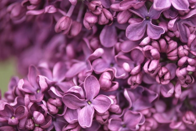 Fond lilas